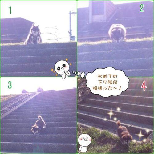 盲目ワンコ、初めての下り階段