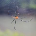 親という蜘蛛の巣ぶっちぎってみよう